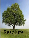 Resolute or Resolutions